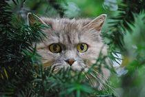 Katze im Baum... 1 von loewenherz-artwork