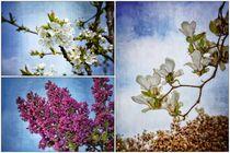 Baumblüten von Claudia Evans