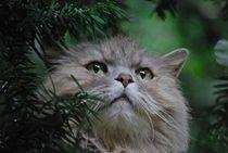 Katze im Baum... 3 von loewenherz-artwork