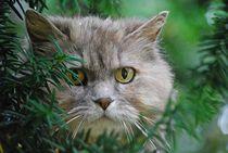 Katze im Baum... 2 von loewenherz-artwork