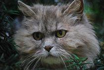 Katze im Baum... 4 von loewenherz-artwork
