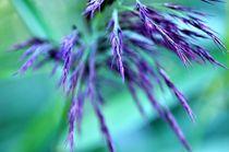Leuchten der Natur - Violett von bilderharmonie