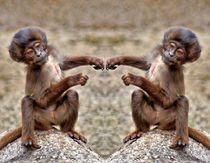 Affen Freunde von kattobello