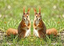 Rote Eichhörnchen Zwillinge by kattobello
