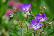 Blumenparadies Reiteralm... 5 von loewenherz-artwork