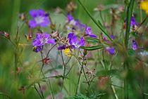 Blumenparadies Reiteralm... 8 von loewenherz-artwork