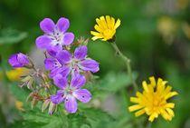 Blumenparadies Reiteralm... 6 by loewenherz-artwork