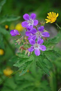 Blumenparadies Reiteralm... 10 by loewenherz-artwork