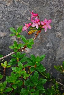 Blumenparadies Reiteralm... 18 von loewenherz-artwork