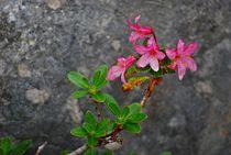 Blumenparadies Reiteralm... 17 von loewenherz-artwork