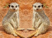Erdmännchen Zwillinge by kattobello