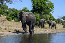 Elefanten von Frauke Scholz