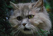 Katze im Baum... 5 von loewenherz-artwork