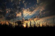 Abendstimmung am Feld by Peggy Graßler
