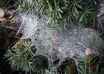 frozen spiderweb von Erik Mugira