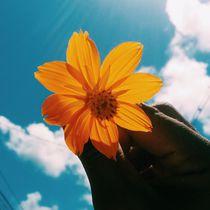 Summer flower by Wend Silva
