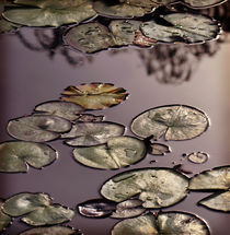 Serene Waterlilies von Karen Black