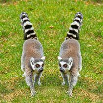 Katta Zwillinge von kattobello