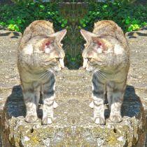 Hauskatzen Gruß von kattobello