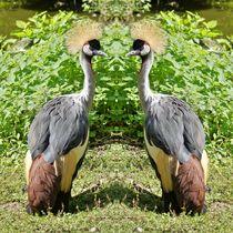 Kronenkranich Duell von kattobello
