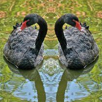 Schwarze Schwäne Zwillinge von kattobello