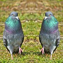 Tauben Tanz 2 von kattobello