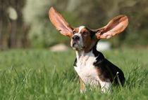 Halt die Ohren steif by Juliane Meyer