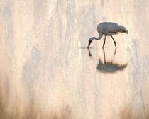Endangered by Maresa Pryor-Luzier