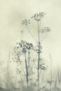 Wilde Blumen 4 by Priska  Wettstein