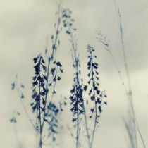 Wilde Blumen by Priska  Wettstein