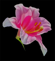 Lily (Digital Art) von John Wain