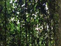 Green Curtain by Sayali Goyal