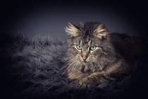 Miau von Doreen Böhnke