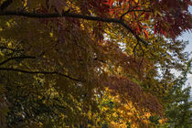 Herbstliches Blattwerk von Petra Dreiling-Schewe