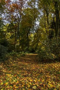 Herbst von Petra Dreiling-Schewe