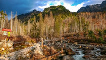 Studeny potok. Cold stream in High Tatras Mountains, Slovakia by Tomas Gregor