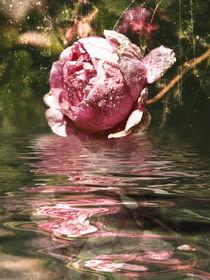 Rosenöl - Rose Oil  von Chris Berger