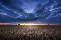 Field sunset  by h3bo3
