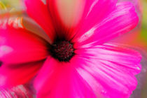 Floral von Petra Dreiling-Schewe