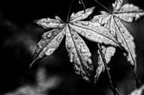 Frisches Grün in schwarzweiß von Petra Dreiling-Schewe