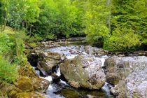 Eiche am Fluss von gscheffbuch