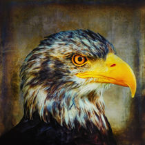 The Eagle by AD DESIGN Photo + PhotoArt