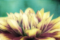 Flower Dream von AD DESIGN Photo + PhotoArt