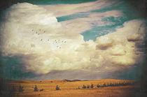 The Faraway Fields by Karen Black