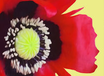 A Single Poppy by John Wain