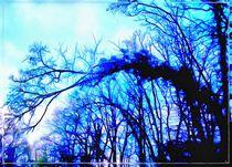 Blue trees von norisknimo