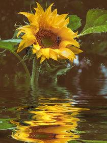 'Für die Küche - Sonnenblumenöl' von Chris Berger