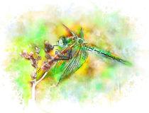 Emerald dragonfly by Elena Oglezneva