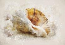 Naturist with seashells von Elena Oglezneva
