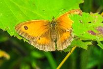 Broken Butterfly  by Vincent J. Newman
